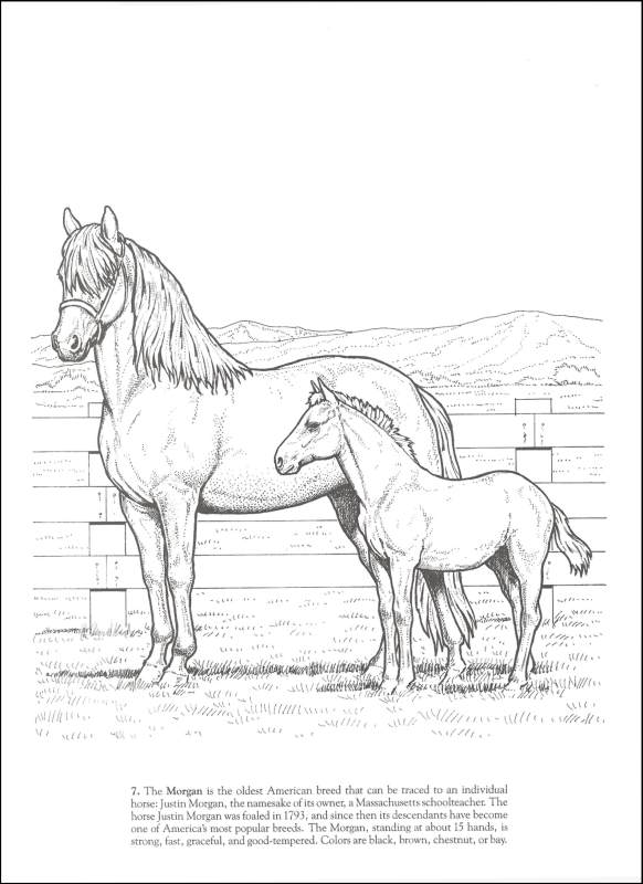 - Horses Of The World Coloring Book Dover Publications 9780486249858