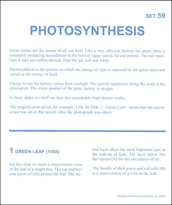 Photosynthesis Microslide Lesson Set