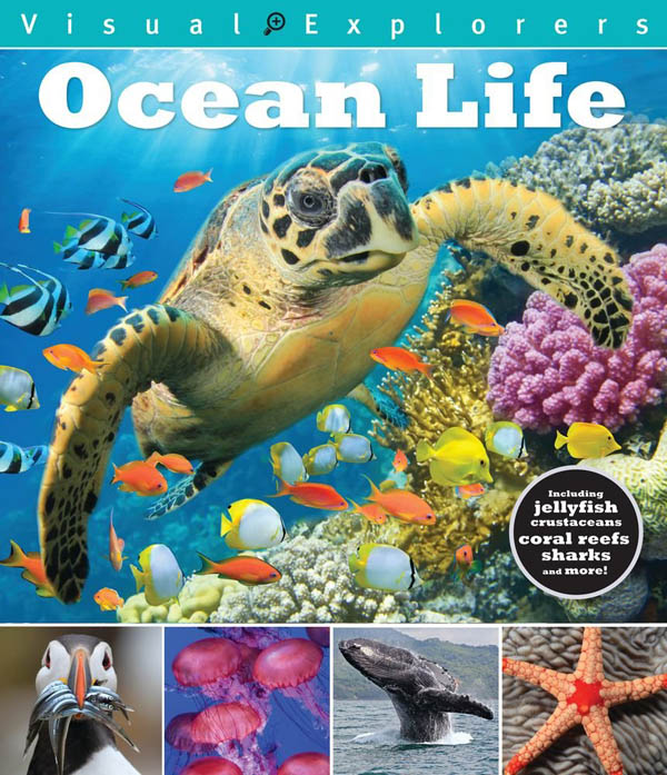 Ocean Life (Visual Explorers)
