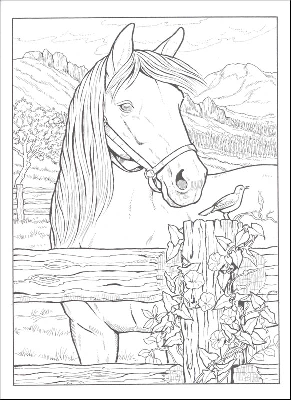 - Great Horses Coloring Book (Creative Haven) Dover Publications  9780486817910