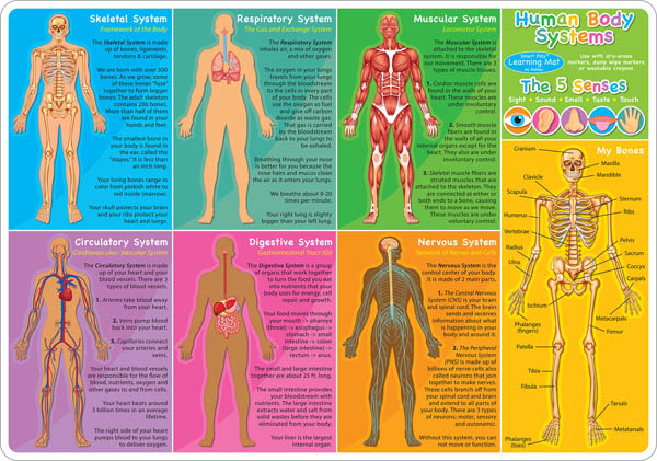 Human Body Smart Poly Learning Mat