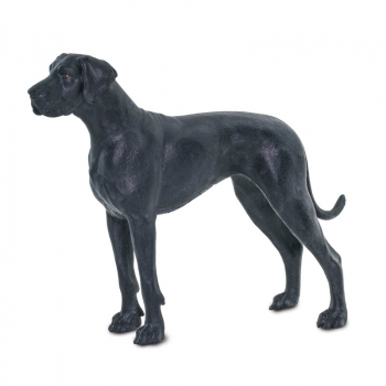 Great Dane (Best in Show)