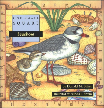One Small Square: Seashore
