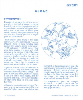 Algae Microslide Lesson Set
