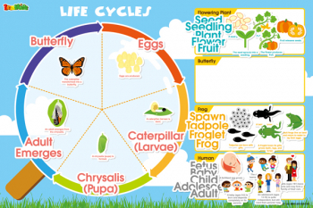 Life Cycles Magnetic Wall Sticker