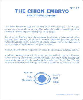 Chick Embryo Microslide Lesson Set