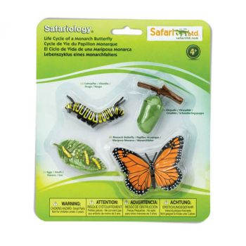 Life Cycle of a Monarch Butterfly (Safariology)