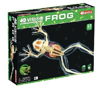 4D Vision Full Skeleton Frog