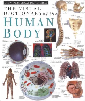 Human Body Visual Dictionary