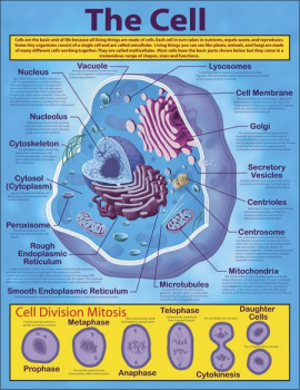Cell Chartlet