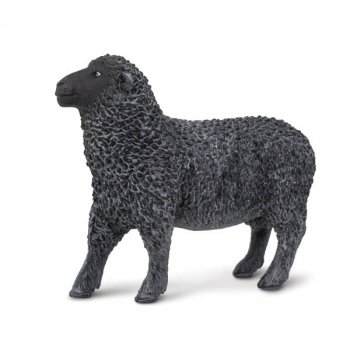 Black Sheep (Safari Farm)
