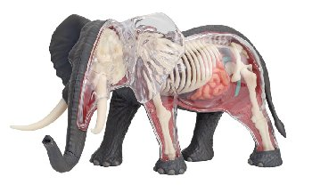 4D Vision Elephant Anatomy Model