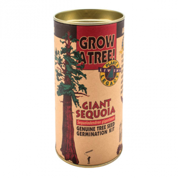 Giant Sequoia Grow-A-Tree Kit