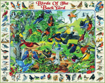 Birds of the Backyard Puzzle - 1000 pc.