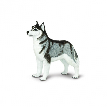 Siberian Husky (Best In Show)