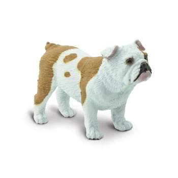 Bulldog (Best in Show)