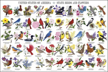"United States of America - State Birds & Flowers Laminated Poster (24"" x 36"")"