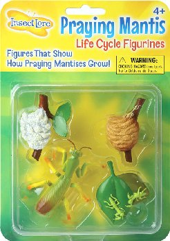 Praying Mantis Life Cycle Figurines