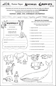 Animal Groups Poster Paper