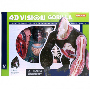 4D Vision Gorilla Anatomy Model