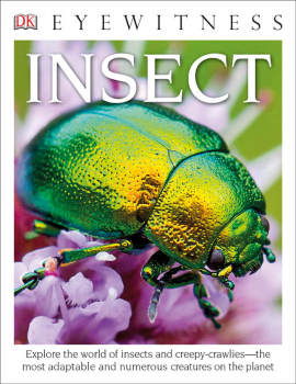 Insect (Eyewitness Book)