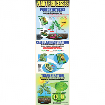 Plant Processes Colossal Poster