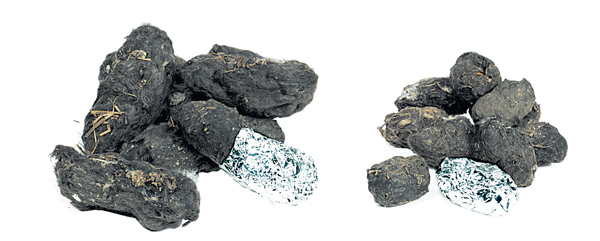 Large Owl Pellets - Refill Pack of 2