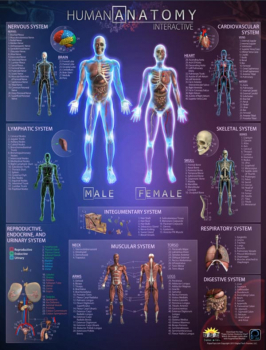 Human Anatomy Interactive Laminated Wall Chart with Free App