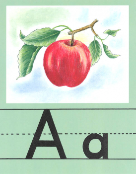 Large Alphabet Set (Illustrated Alphabet Cards)