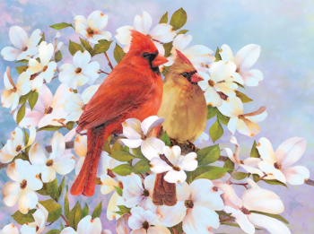 Colour Pencil By Numbers - Cardinals