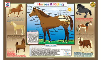 Horses & Riding Placemat