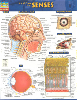 Anatomy of the Senses Quick Study